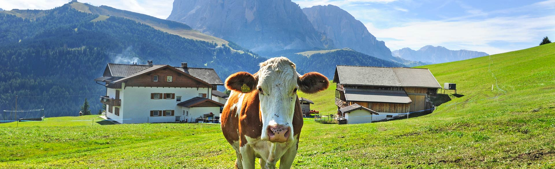 Summer - Farm holidays Tulba in Selva in Val Gardena